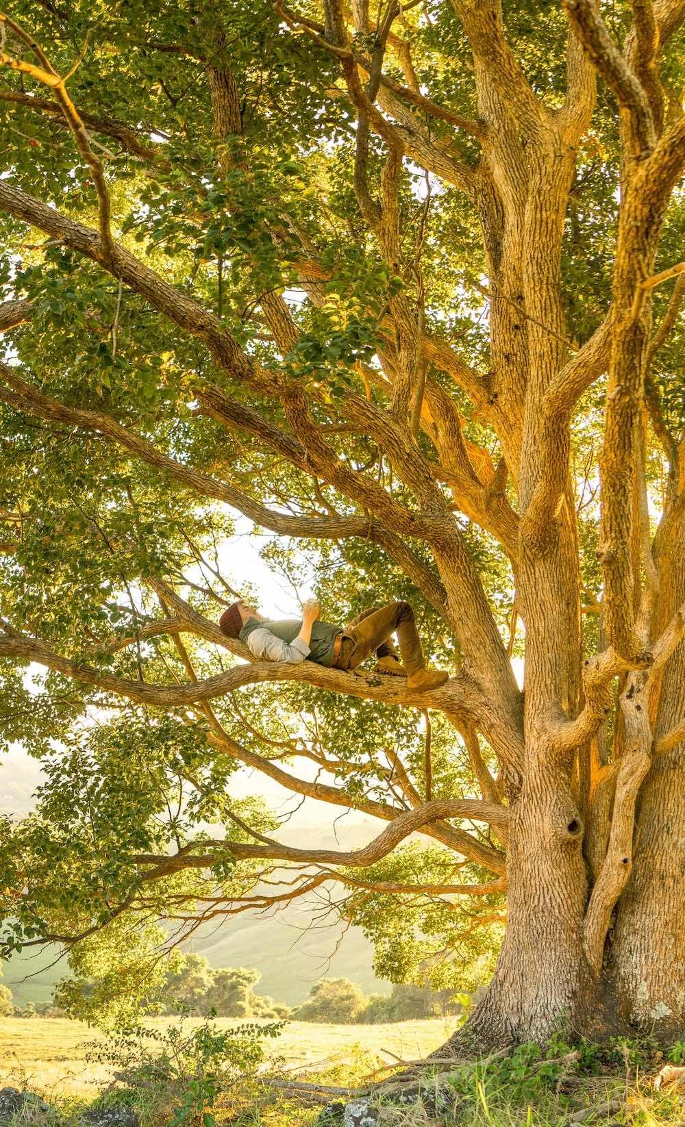 Méditation dans un arbre