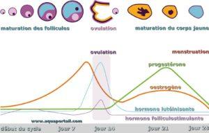 cycle-premenstruel-comment-se-soigner-naturellement